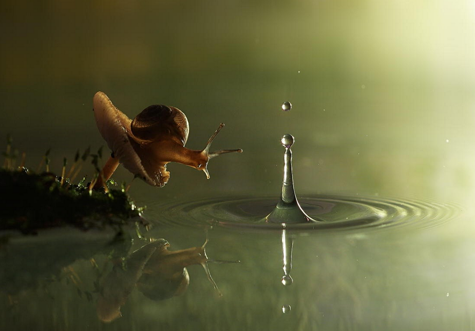snail and the raindrop by-vadim-trunov
